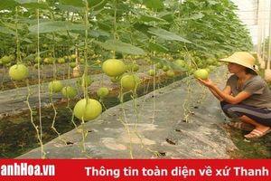 Hiệu quả mô hình nông nghiệp ứng dụng công nghệ cao tại xã Xuân Khánh