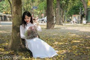 Mùa lá sấu nhuộm vàng trên con đường lãng mạn nhất Hà Nội