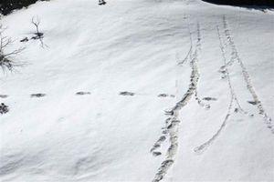 Giật mình bằng chứng khó cãi dấu vết người Tuyết trên đỉnh Himalaya