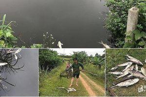 Cá nuôi ở Nghĩa Đàn chết hàng loạt chưa rõ nguyên nhân