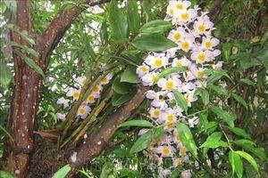 Bảo tồn ba loài lan quý hiếm tại Thanh Hóa và khu vực Bắc Trung Bộ