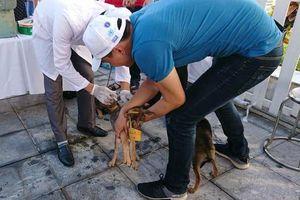 Đẩy mạnh công tác phòng, chống dịch tả lợn châu Phi và quản lý chó nuôi