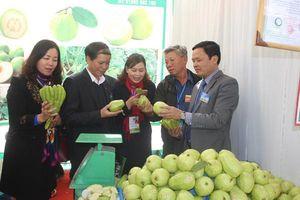 Mê Linh phát triển chuỗi nông sản an toàn