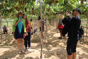 Ninh Thuận: Du lịch nông nghiệp hút khách