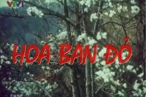 'Hoa ban đỏ' tái hiện những khoảng lặng thời chiến dịch Điện Biên Phủ