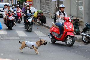Long An: Tai nạn chết người vì tránh chó thả rông