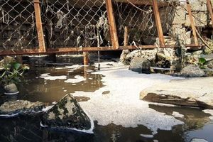 Nước thải bốc mùi đe dọa 'bức tử' công viên lớn nhất Đà Nẵng