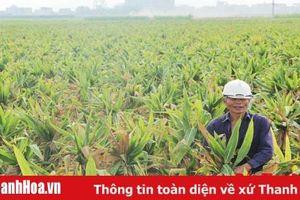 Xã Định Tường phát triển 220 ha sản xuất hạt giống ngô lai F1 tập trung