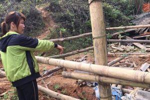 Trâu bò chết bất thường ở Bắc Kạn: Phân tích có chất độc Cyanua