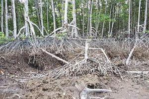 Bắt tạm giam 3 cán bộ Ban quản lý rừng phòng hộ