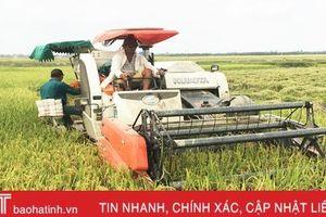 Năng suất giống lúa xuân cao nhất ở Lộc Hà đạt khoảng 60 tạ/ha