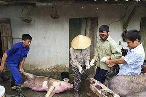 Bắc Ninh: Lập 3 đoàn liên ngành thanh tra dịch tả lợn châu Phi