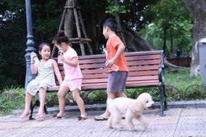 Nói không với chó thả rông không rọ mõm: 'Đại náo' từ làng quê ra phố thị (Kỳ 1)