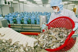 Đẩy mạnh xuất khẩu tôm sang Canada, cơ hội từ CPTPP