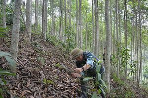 Lợi ích kép từ hỗ trợ phát triển rừng