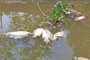 Phát hiện khoảng 1 tấn cá chết trên sông Bàn Thạch