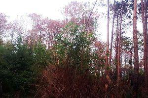 Khẩn trương điều tra vụ đầu độc rừng quy mô lớn