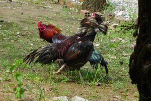 Vụ bắn người ở trường gà: Khởi tố 11 người