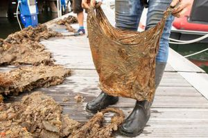Túi 'phân hủy sinh học' sau 3 năm dưới đất vẫn có thể sử dụng
