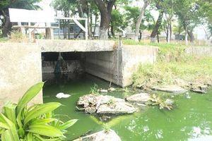 Đà Nẵng: Hồ nước trong Công viên 29/3 bị ô nhiễm