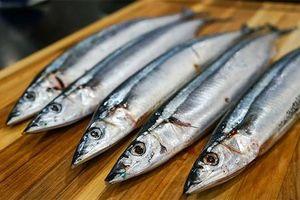 Điều thú vị về cá thu đao có nhiều ở vùng biển VN