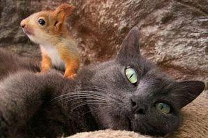 Sóc mồ côi nép mình yên bình trong lòng mèo mẹ gây sốc