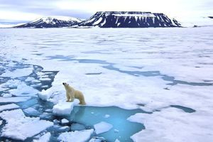 Trái đất đối mặt với tuyệt chủng nếu càng nóng lên và biến đổi khí hậu gia tăng: Nhiệt độ tăng - gần hơn nguy cơ tuyệt chủng