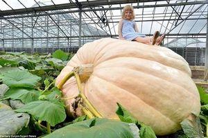 Chiêm ngưỡng với loại rau củ 'khổng lồ'