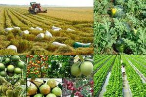 Quản lý cơ sở dữ liệu quốc gia về trồng trọt