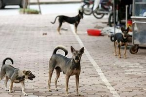 Hưng Yên: Khởi tố chủ đàn chó cắn chết bé trai 7 tuổi