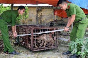 Khởi tố bà chủ nuôi đàn chó cắn chết cháu bé 7 tuổi ở Hưng Yên