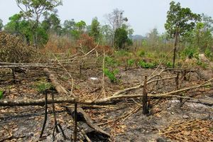 Gia Lai: Kỷ luật 02 tập thể và 18 cá nhân vì để mất rừng