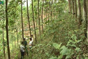 10 năm trồng cao su ở Sơn La: Gỡ nút thắt cho dân bằng cách nào?