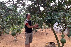 Mở rộng vùng sản xuất cây ăn quả hàng hóa