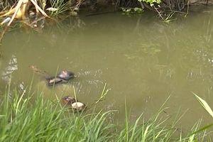 Cứu bạn nhậu té sông, cả hai cùng tử vong