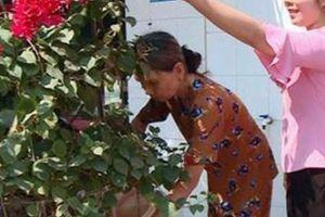 Về vùng quê Nhơn Phúc, ai cũng choáng ngợp bởi rực rỡ sắc hoa
