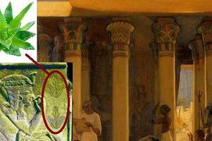 Tại sao Lô hội được coi là 'cây bất tử' trong truyền thuyết