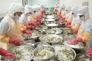 Sản xuất nhỏ lẻ 'cản chân' tôm Việt