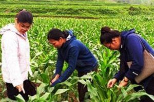 Nông dân chủ động trồng cấy nhờ...phân bón trả chậm