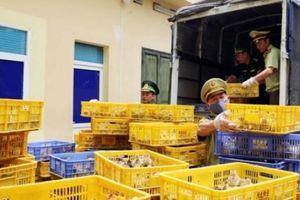 Quảng Ninh: Bắt giữ hơn 22.000 con gà giống nhập lậu lúc nửa đêm