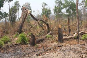 Gia Lai: Để mất rừng vùng biên, kỷ luật 2 tập thể, 18 cá nhân