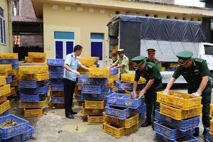 Quảng Ninh: Bắt phương tiện vận chuyển trái phép hơn 22.000 con gà giống