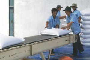 Lộc Trời và Tấn Vương sẽ xuất khẩu 84.000 tấn gạo mỗi năm sang Trung Quốc