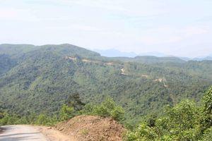 Thừa Thiên Huế: Duy trì độ che phủ rừng đạt 57,5% trong năm 2019