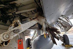 Tiêm kích F-35B đâm vào chim khiến Mỹ thiệt hại hàng triệu USD