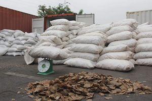 Bắt giữ hơn 8 tấn vảy tê tê giấu trong container qua cảng Hải Phòng