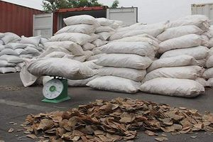 Hải Phòng: Bắt giữ hơn 8 tấn vảy tê tê tại cảng Vip Green