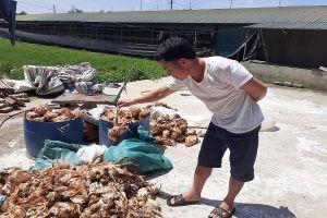 Truy tìm nhóm người nghi ném đá làm chết 1.200 con gà ở Hà Tĩnh