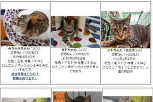 Nara, thành phố dành tình yêu cho chó mèo hàng đầu Nhật Bản