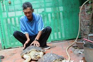 Bà Rịa-Vũng Tàu: Tiếp nhận hai rùa biển quý hiếm để thả về biển